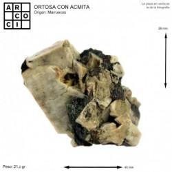 ORTOSA CON ACMITA (MARRUECOS)