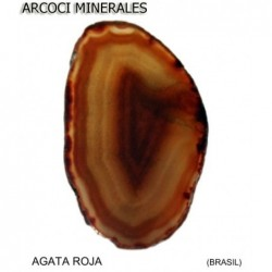 AGATA ROJA (BRASIL)