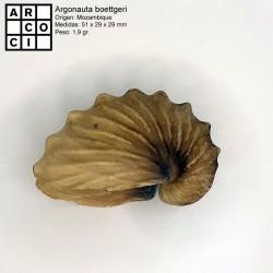 Argonauta boettgeri