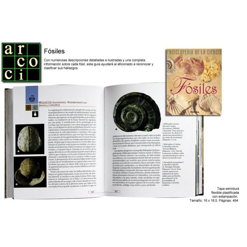 Fósiles - Enciclopedia de la Ciencia