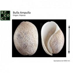 Bulla Ampulla