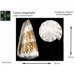 Conus imperialis