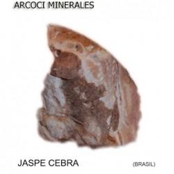 JASPE CEBRA (BRASIL)