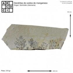 Dendritas de oxidos de manganeso (Alemania)