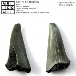 DIENTE DE TIBURON