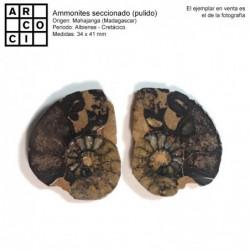 Ammonites seccionado (pulido)