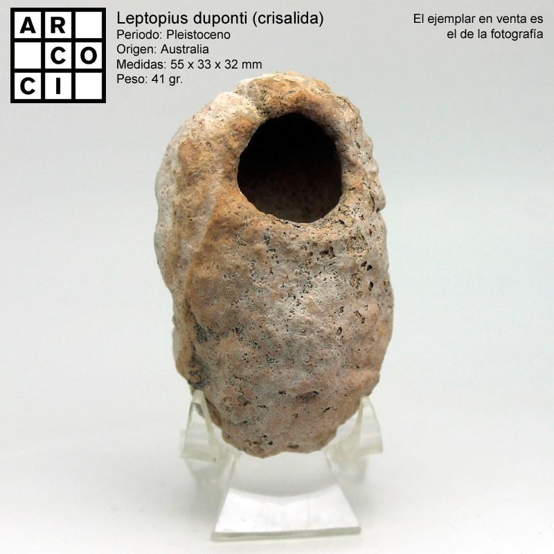 Leptopius duponti