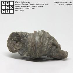Ketophyllum